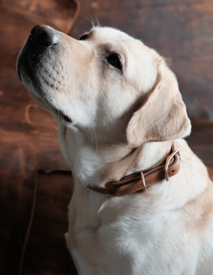 Аксессуары из кожи для животных